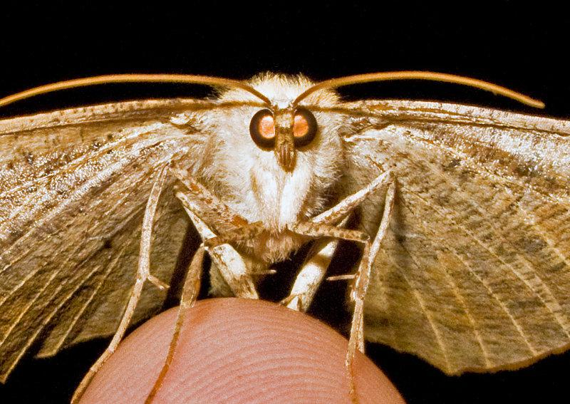 Moth-2009-45