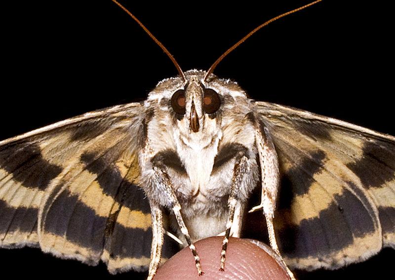 Moth-2011-13