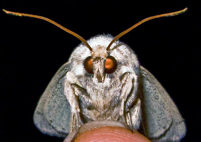 Moth-2009-14