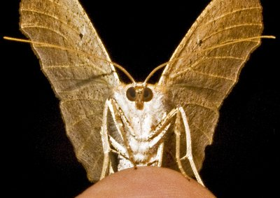 Moth 09 - 33b