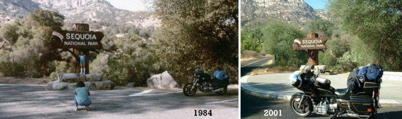 Sequoia- 1984/2001