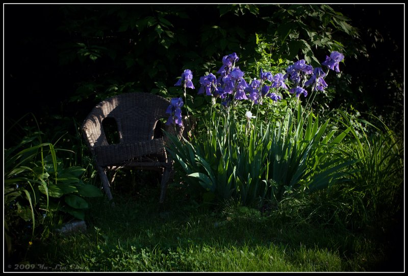 Chair and the Iris