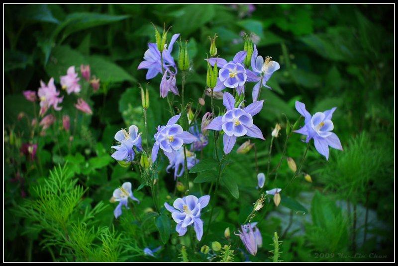 More little flowers :-)