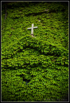Cross in a bed of spider plants