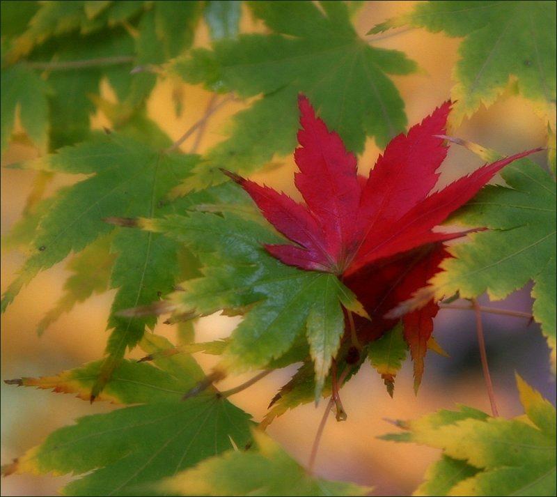 errant leaf