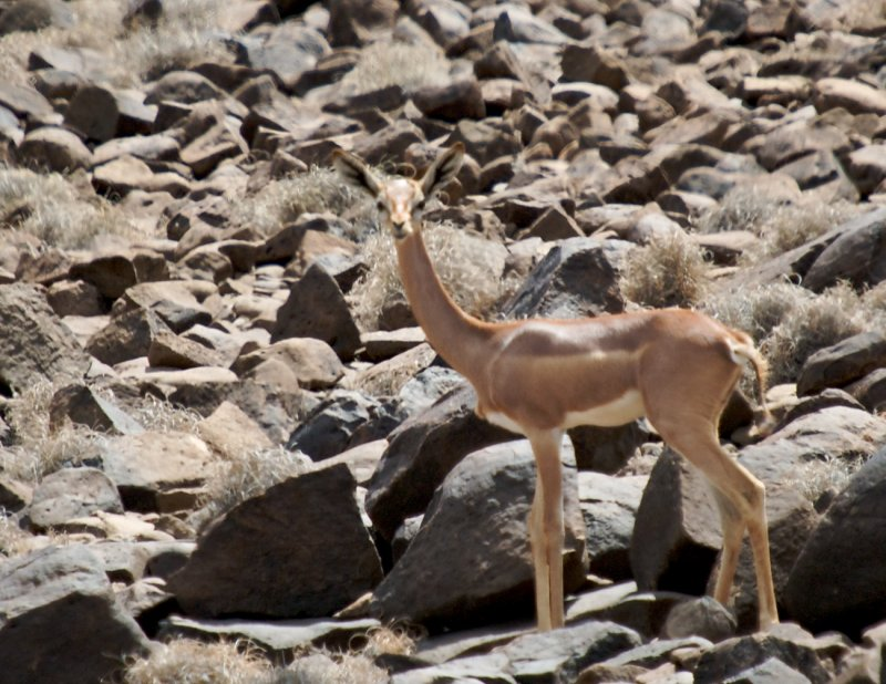 Djibouti  527.jpg