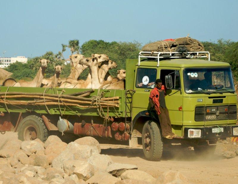 Djibouti  536.jpg