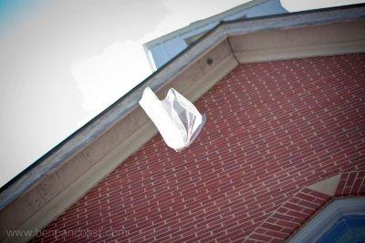 veil, bride, wind, blown away