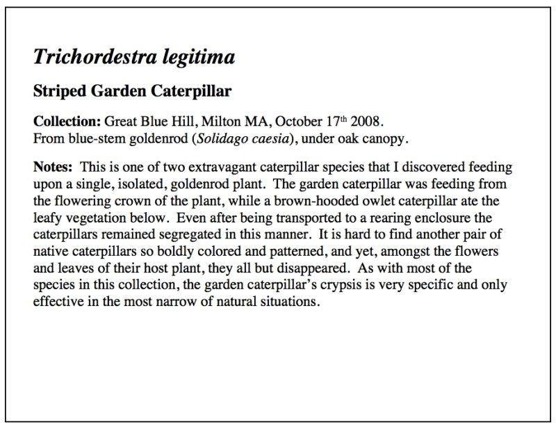 Garden Caterpillar Essay