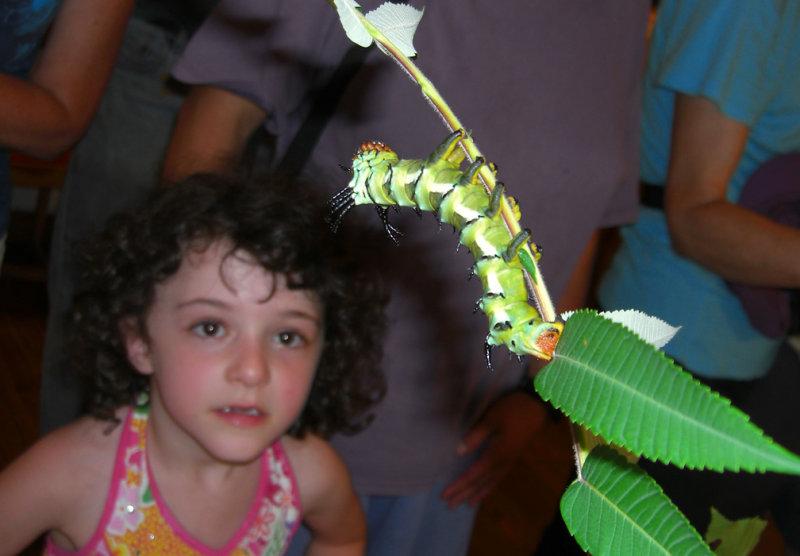 Broadmoor Caterpillar Show: Big caterpillar