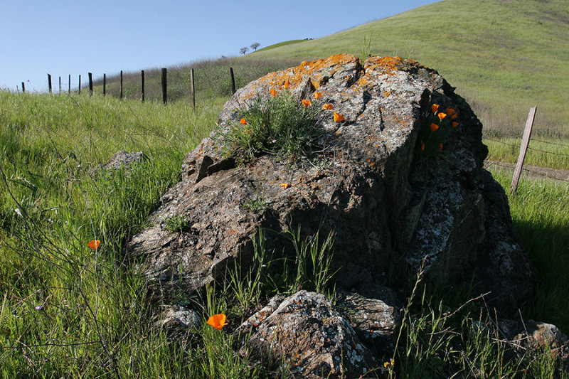Poppies on the Rock