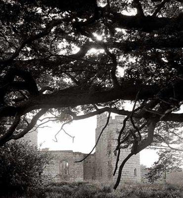 Overhanging Oaks, Bodiam castle, England, 1973