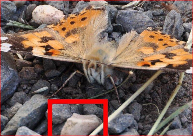 Butterfly_test_100.JPG