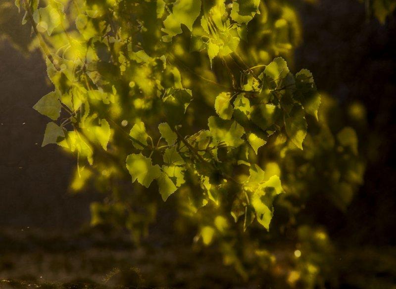 <B>Spirit of Spring</B> <BR><FONT SIZE=2>Lone Pine, California - April 2008</FONT>