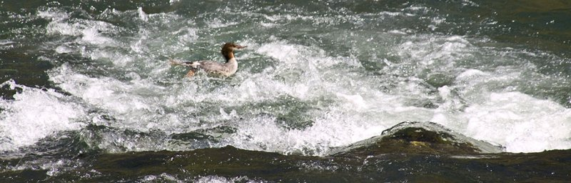 <B>Riding the Rapids</B> <BR><FONT SIZE=2>Trinity River, August, 2007</FONT>