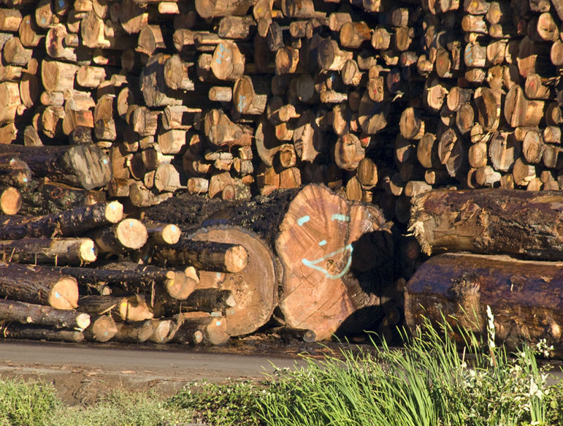 <B>Happy Lumber</B> <BR><FONT SIZE=2>Weaverville, CA, August, 2007</FONT>