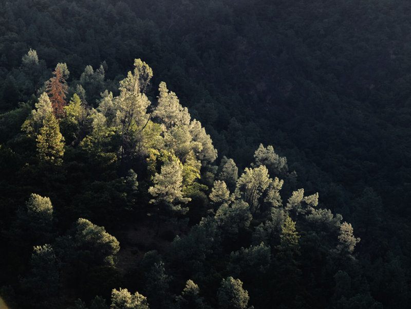 <B>Kissed by Morning Light</B> <BR><FONT SIZE=2>Trinity River, August, 2007</FONT>
