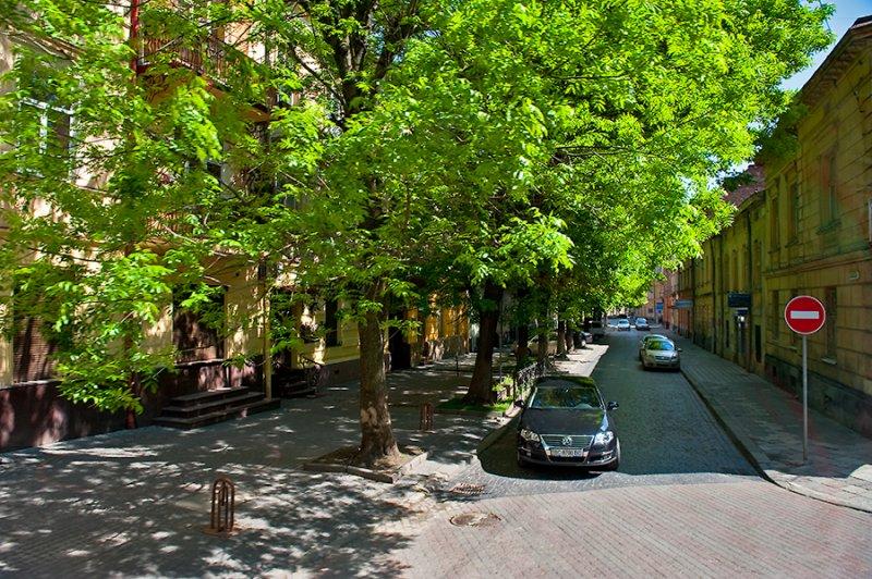 Trees Shaded Street