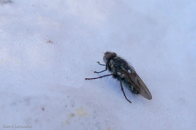 Day 362 - Snow Fly - Don't Bother Me