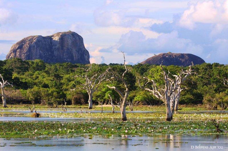 Yala landscape.jpg