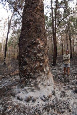 Brooke in burnt wet sclerophyll (P9281344)