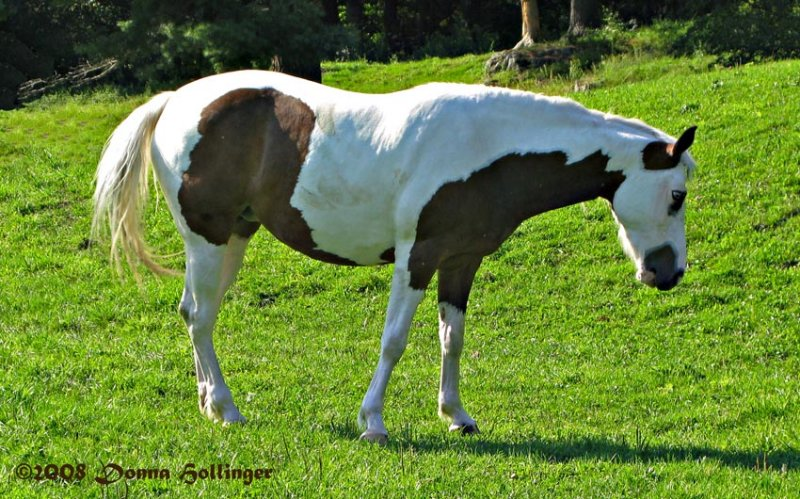 Painted Horse Revisited