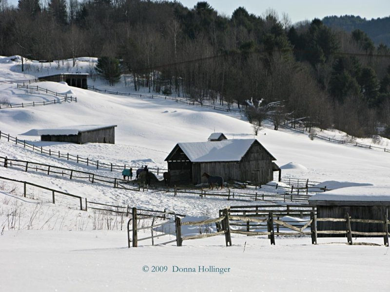 Horses at Huntington Farms After A Snow