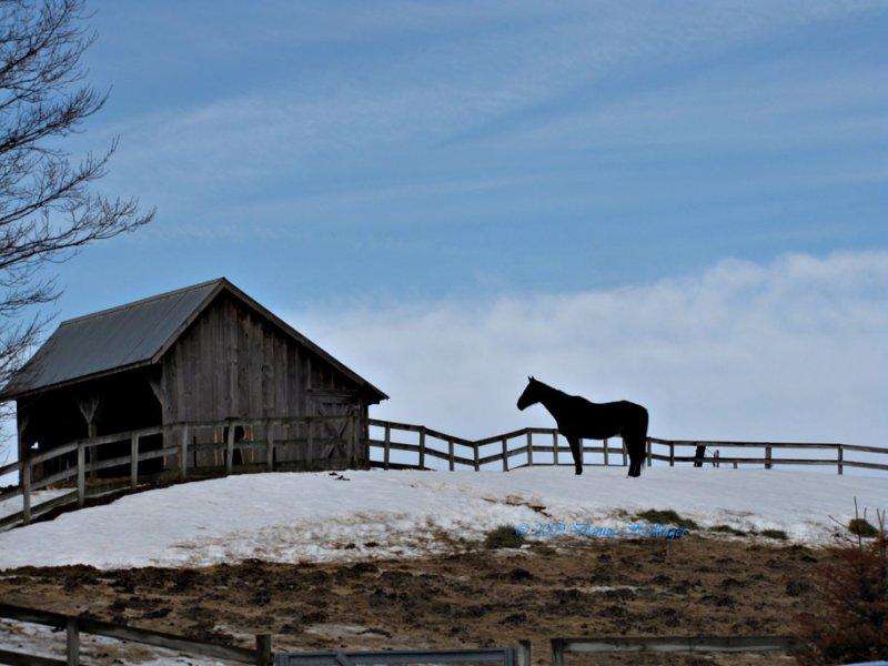 Strafford Horse