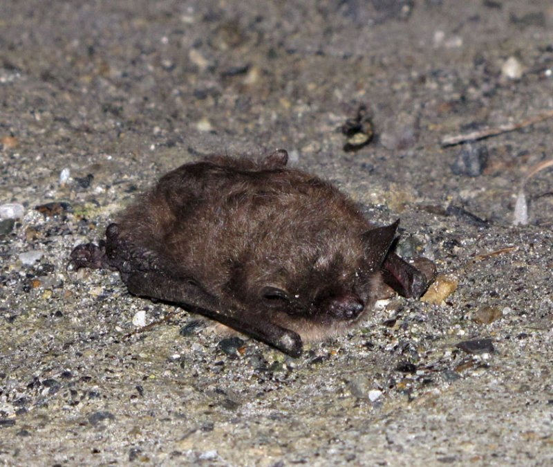 This bat decided to take a nap