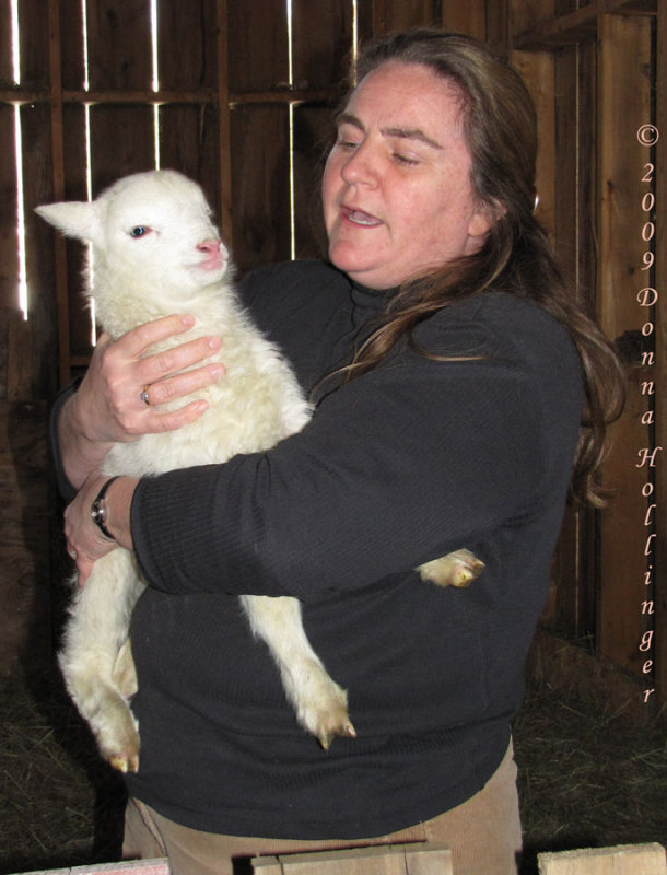 Jean With Lamb At Windy Hill Farm