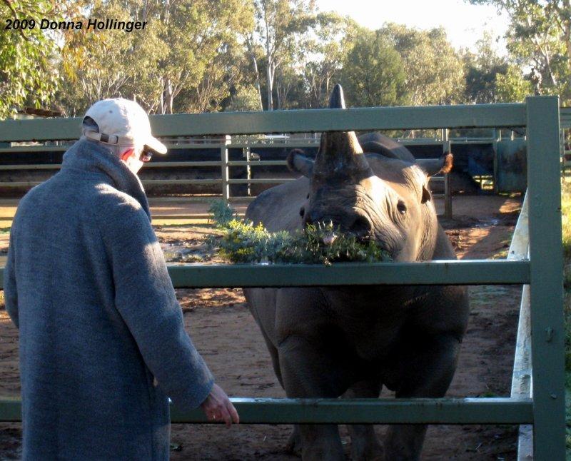 Jan Feeding the Rhino