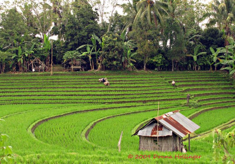 Intense Human Effort Creates These Rice Terraces