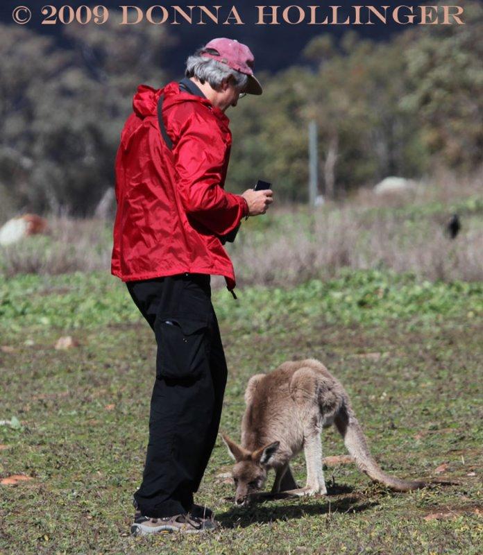 Peter and The Kangaroo
