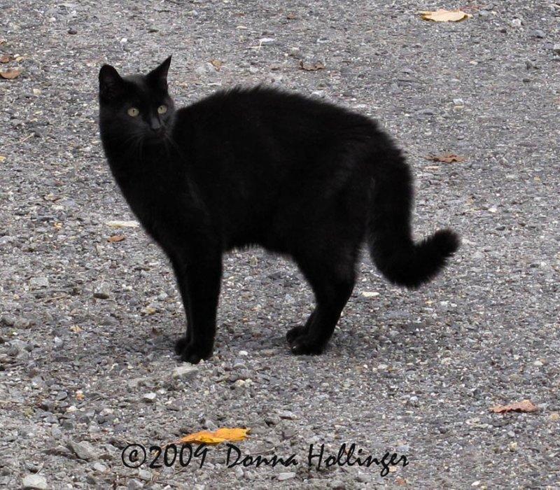 Lindas Kitty Spooked