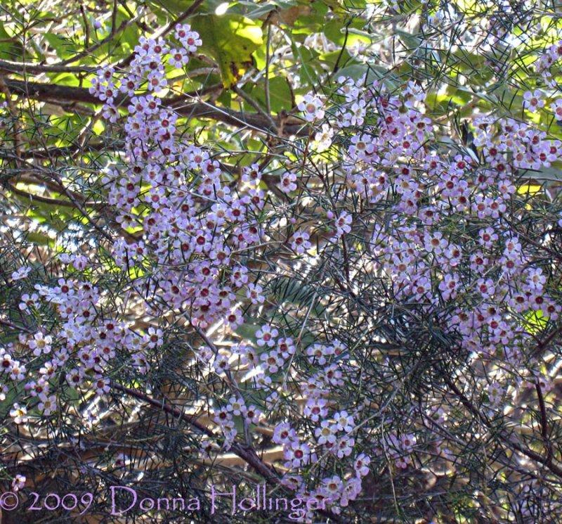 Flowery Tree at Jan and Rics