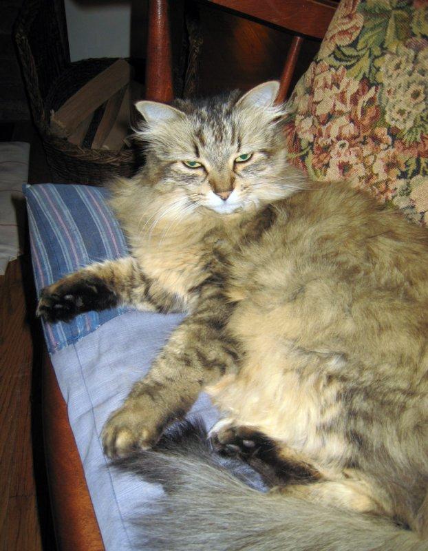 Annis cat Poco, Her Bedroom Eyes Routine