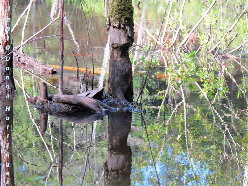 Beaver Pool
