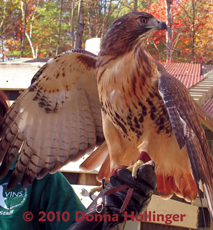 See My Inside Wing Feathers!