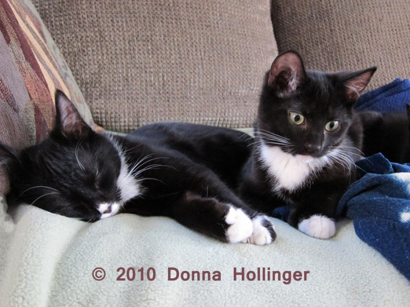 Jimi and Rosie On the Couch