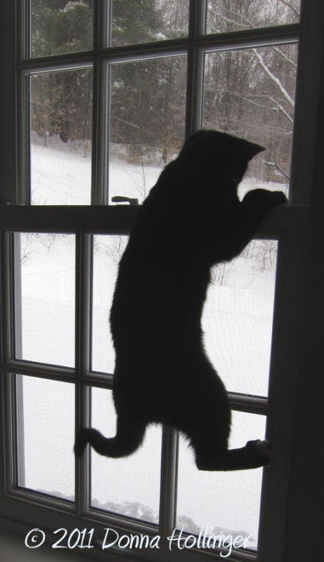 Jimi chasing a fly up a window.