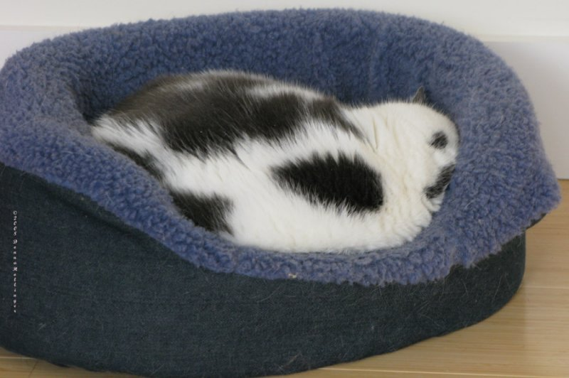 Van Loch in her Kitty Bed