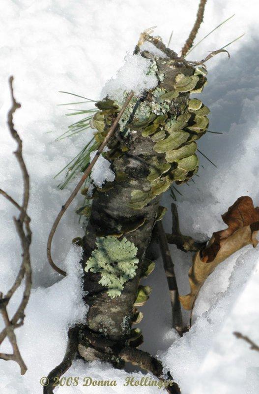 Stump with Lichen and Turkey tail Mushroom
