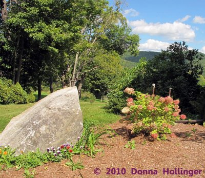 Hydrangea and the Rock