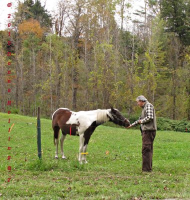 Petter making friends with the Pony