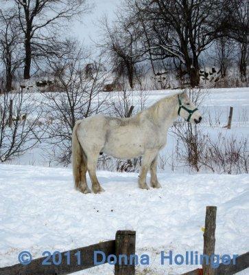Earles Horse