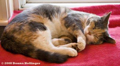 Josie Sitting on Chings Pillow