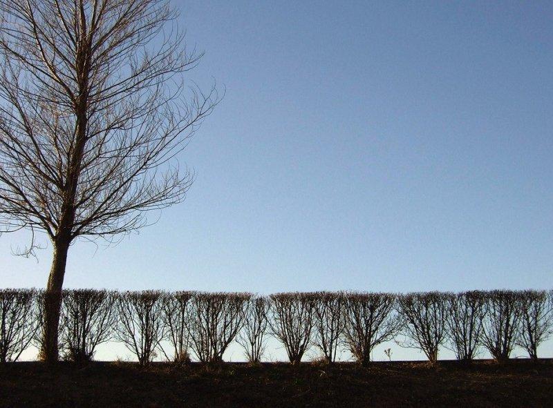 arbustos obedientes