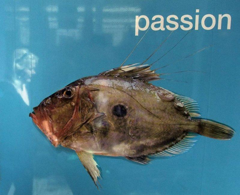 smoker fish