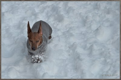 Max in a snow