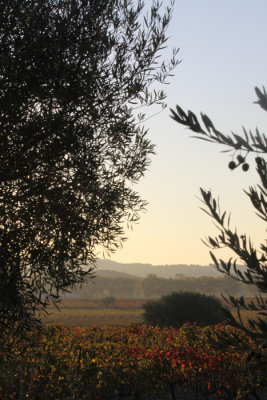 a hike between Olivetrees and vines...